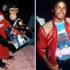 Bubbles chimpanzee Michael Jackson